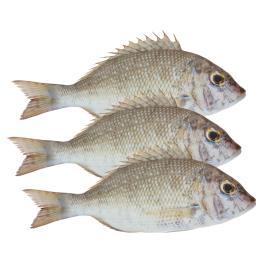 IRANIAN NAGROOR FISH - KG