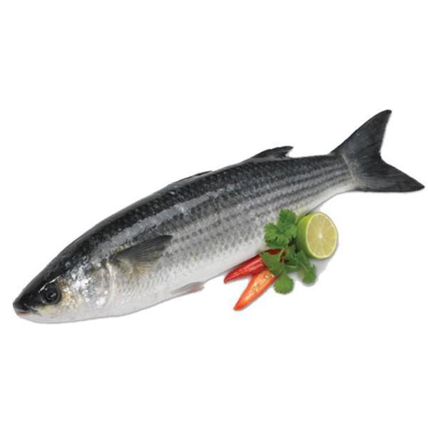 EGYPTIAN BOORI FISH - KG