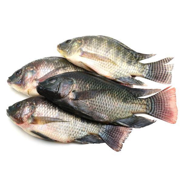 EGYPTIAN TILAPIA FISH - KG