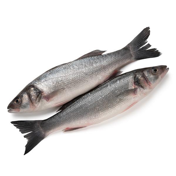 TURKISH SEA BASS FISH - KG