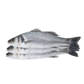TURKISH SEA BASS SMALL FISH - KG